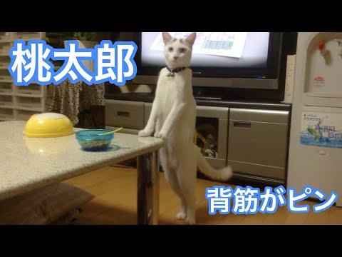 人が入っているような猫