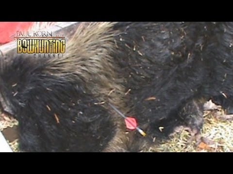 Mechanical Vs Fixed Broadhead penetration TEST on a real Hog hide & Shield