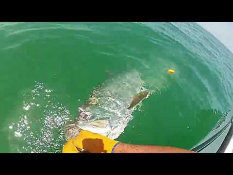 Tarpon Fishing Sarasota, Fl with Capt. Andy Cotton 5/20/13