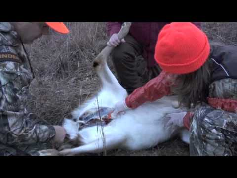 How to gut a deer Never Without field dressing/ first time.