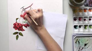 Акварель | Рябина. (Watercolor | Rowanberry)