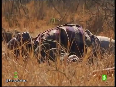 Mineros asesinados a sangre fría en Sudáfrica.