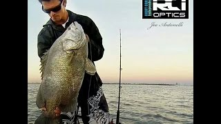 Buoy Call - Tripletail Fishing