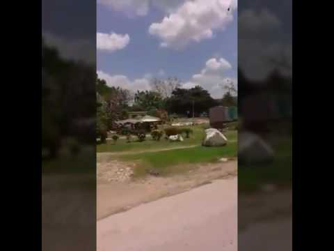 Siguaney  Mayo de 2016