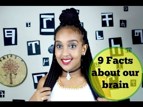 9 FACTS ABOUT OUR BRAIN ||