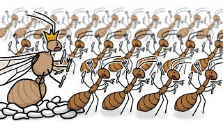 Invasion of the Yellow Crazy Ants!