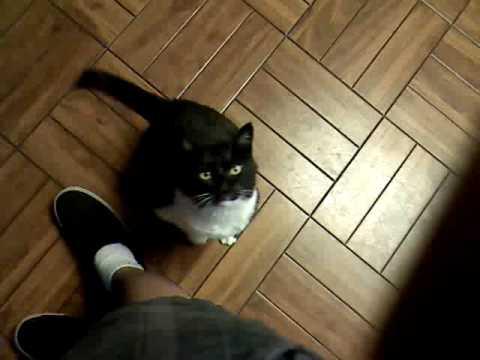 house training a new kitten