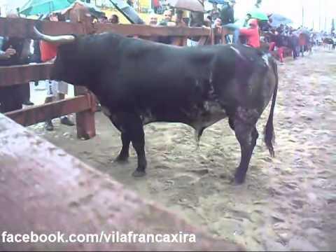 Largadas Touros em Vila Franca de Xira- Feira Outubro 2014