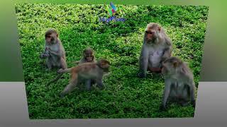 Cảnh đẹp Cần Giờ TP HCM_ Nhạc hòa tấu 28
