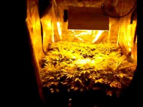 4x4 Grow Tent 600w Hps 4x4 Grow Tent