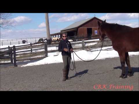 Basic Body Language with Horses