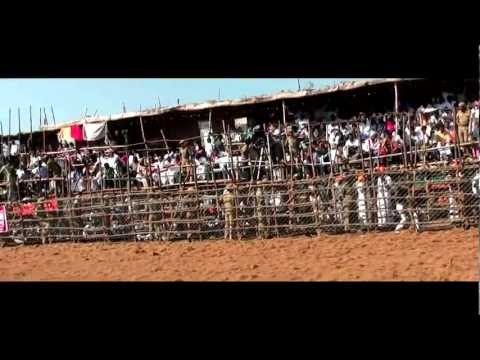 Jallikattu (documentary) video