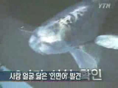 Human Face Fish / pez con rostro humano / 人面鱼