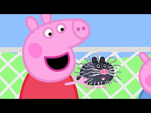 Peppa Pig English Episodes | Visiting Mrs Badger's Farm with Mandy Mouse | Peppa Pig