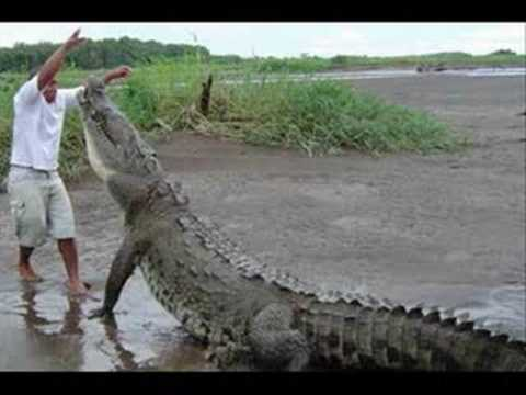 Rolf Harris :: Never Smile at a Crocodile (with lyrics)