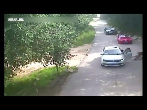 Tijger doodt vrouw in safaripark