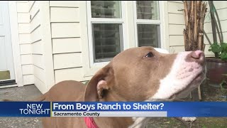 Group Wants To Turn Jail Into Rehab Facility For Animals