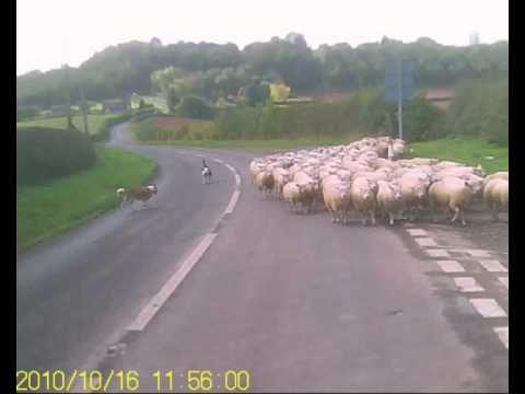 Wales+sheep+shaggers