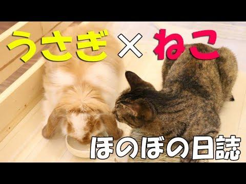 無料テレビでねことうさぎ【NyanTomo】を視聴する