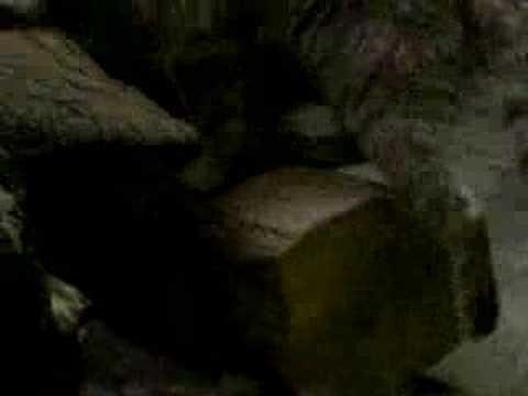 マヌルネコの尻尾(上野動物園)