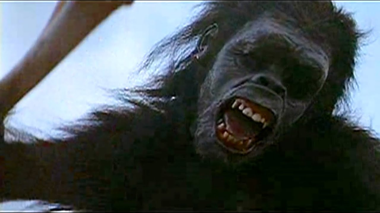 Space Apes Movie 2001 a Space Odyssey Ape And