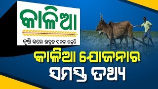 """Special Report: Important Facts To Know About """"Kalia"""" Scheme"""