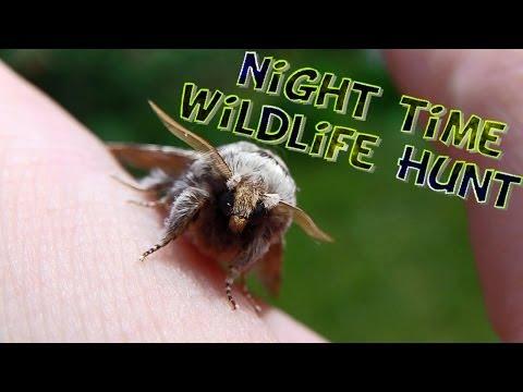 Night Time Wildlife Hunt video
