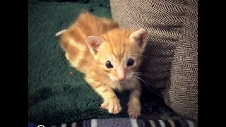 Kitten Born Without Eyelids Loves His New Siblings