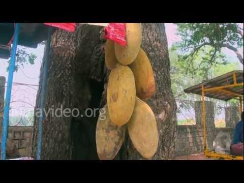 0162 MP11 Mandu mandu michli Fruits MP4 ...