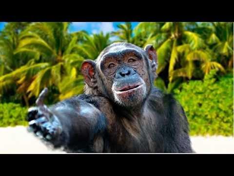 Поздравления с днем обезьяны