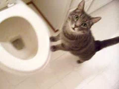 cat who likes to watch the toilet flush - YouTube