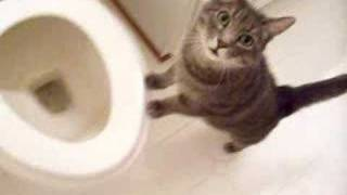 cat who likes to watch the toilet flush