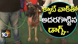 Dog Show 2018 In Visakha | Vizag Canine Welfare Association | AP