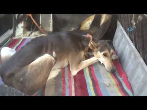 Araç İçinde Bağlanan Köpeğin Sahibi Pes Dedirtti