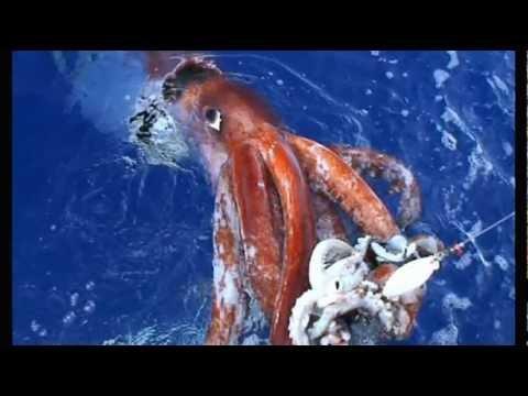 堂々たる海の怪物ダイオウ...