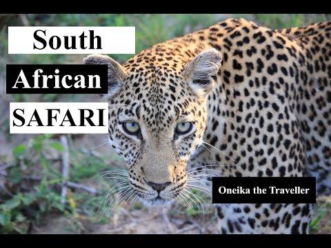 South African Safari (Sabi Sands & Kruger National Park)
