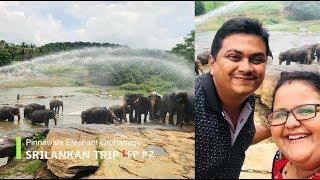 ശ്രീലങ്ക കിടു ആണ് - Pinnawala Elephant Orphanage Srilanka EP #2