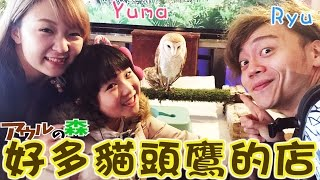 可以摸好多貓頭鷹的店[Ryu,Yuma]/Owl nomori, The cafe you can touch owl/アウルの森に行ってみた[リュウ&ゆま][NyoNyoTV妞妞TV玩具]