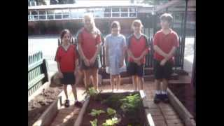 Regency Park Primary School - Edible Garden