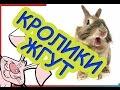 Забавные кролики. Смешные кролики. Смешная подборка!
