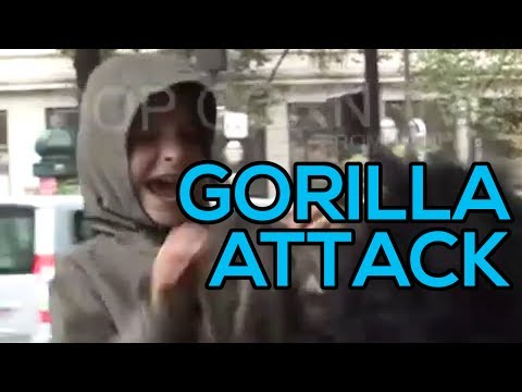 Hidden Camera  : Real Gorilla ?