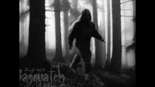 Beaty White - Sasquatch