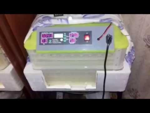 Китайский инкубатор Вывод от А до Я! 2 часть