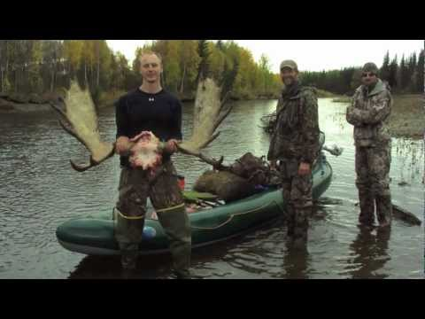Alaskan Moose Hunt 2012: 3 Moose, 1 Black Wolf and a Boone & Crockett Grizzly Bear shot at 10 yds!