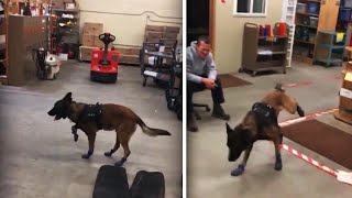 South Dakota Police K-9 Can't Stand His New Boots
