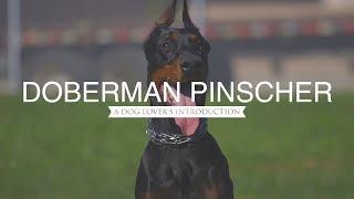 DOBERMAN PINSCHER: A DOG LOVER