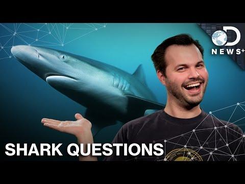Shark Week Twitter Q&A With DNews Plus