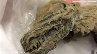 50,000 Year Old Perfectly Preserved Animals Found In Canada (Sept. 18, 2018)