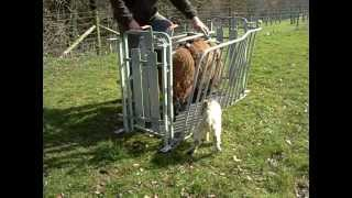 WM Ironwork ewe turnover crate