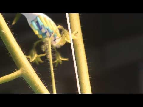 Buzz Pollination For Indoor Gardens And Hydroponics